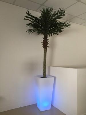 Location de palmier et pot lumineux en Ile de France