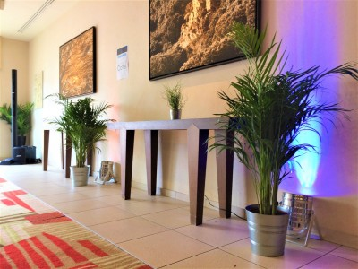Plante naturelle à la location pour décorations à Paris et île de France