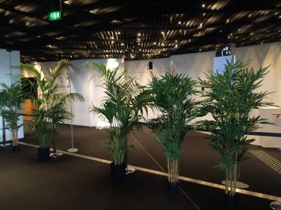 Plantes à louer pour événement en Picardie